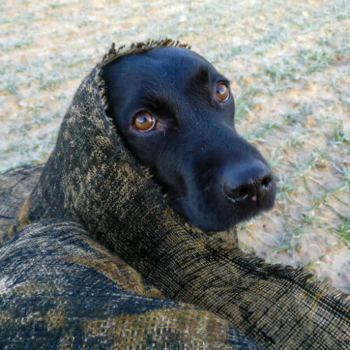 Camouflage Sita